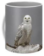 Snowy Owl On An Ice Flow Coffee Mug