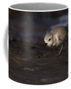 Snowy Plover On The Hunt Coffee Mug