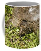 Florida Soft Shelled Turtle - Apalone Ferox Coffee Mug