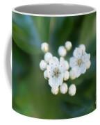 Soft Hawthorn Coffee Mug