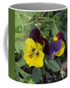 Solvang Pansies Coffee Mug