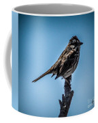 Song Sparrow On Top Of Branch Coffee Mug