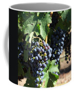 Sonoma Vineyards In The Sonoma California Wine Country 5d24630 Square Coffee Mug