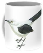 Southern Pied Babbler  Coffee Mug