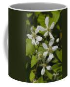 Southern Sawtooth Highbush Blackberry Blossoms - Rubus Argutus Coffee Mug