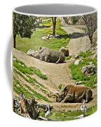 Southern White Rhinoceros In San Diego Zoo Safari Park In Escondido-california Coffee Mug