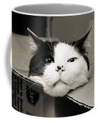Special Delivery It's Pepper The Cat  Coffee Mug