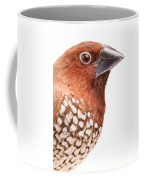 Spice Finch Lonchura Punctulata Portrait Coffee Mug