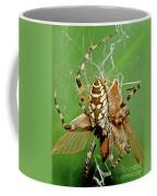 Spider Eating Moth Coffee Mug