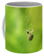 Spider Wrapping Its Food Coffee Mug