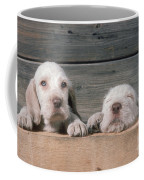 Spinone Puppies Coffee Mug