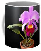 Spotlight On Purple Potted Cattleya Orchid Coffee Mug