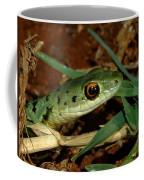 Spotted Bush Snake Philothamnus Semivariegatus Coffee Mug