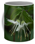 Spotted Mandrin . Disporum Maculatum Coffee Mug