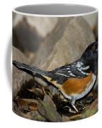 Spotted Towhee Coffee Mug