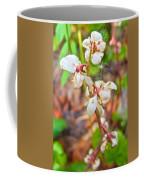 Spotted Wintergreen On Horseshoe Lake Trail In Denali Np-ak - Coffee Mug