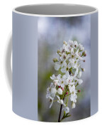 Spring Blooming Bradford Pear Blossoms Coffee Mug