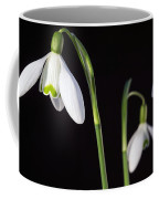 Spring Comes To A Wall Near You Coffee Mug