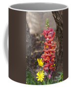 Spring Framed Coffee Mug