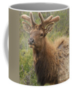 Spring Gaze Coffee Mug