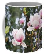 Spring Magnolia Tree Flowers Pink White Coffee Mug