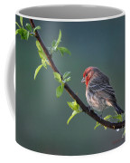 Song Bird In Spring Coffee Mug