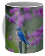 Spring Time Blue Bird Coffee Mug