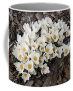 Springtime Abundance - A Bouquet Of Pure White Crocuses Coffee Mug