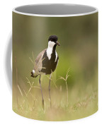 Spur-winged Lapwing Coffee Mug