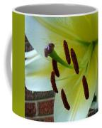 Sq Lily Morning Coffee Mug