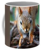 Squirrel Close-up Coffee Mug