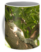 Squirrel On The Tree Coffee Mug