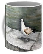 St Augustine Gull Coffee Mug