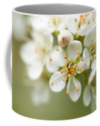 St Lucie Cherry Blossom Coffee Mug