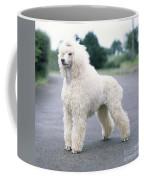 Standard Poodle Dog, Unclipped Coffee Mug