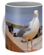 Stare Of A Seagull Coffee Mug