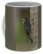 Starling And Young Coffee Mug