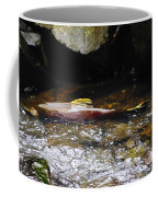 Steelhead Resting In The Shallows Coffee Mug
