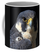 Steely Stare Coffee Mug
