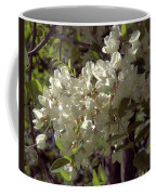 Stem Of Locust Flowers Coffee Mug