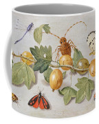 Still Life Of Branch Of Gooseberries Coffee Mug by Jan Van Kessel