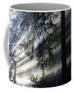 Stout Grove Redwoods With Sunrays Breaking Through Fog Coffee Mug