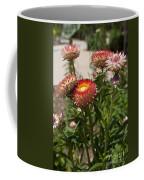 Straw Flowers Xerochrysum Bracteatum Coffee Mug