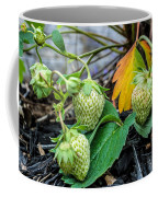 Strawberries - Soon To Be Picked Coffee Mug