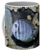 Striped Fish Coffee Mug