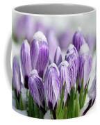 Striped Purple Crocuses In The Snow Coffee Mug