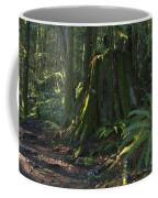 Stump And Fern Coffee Mug