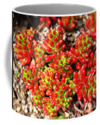 Succulent 3 Coffee Mug