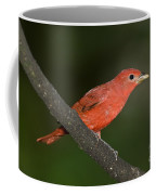 Summer Tanager Male Perched-ecuador Coffee Mug