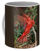 Summer Tanager Piranga Rubra Landing Coffee Mug